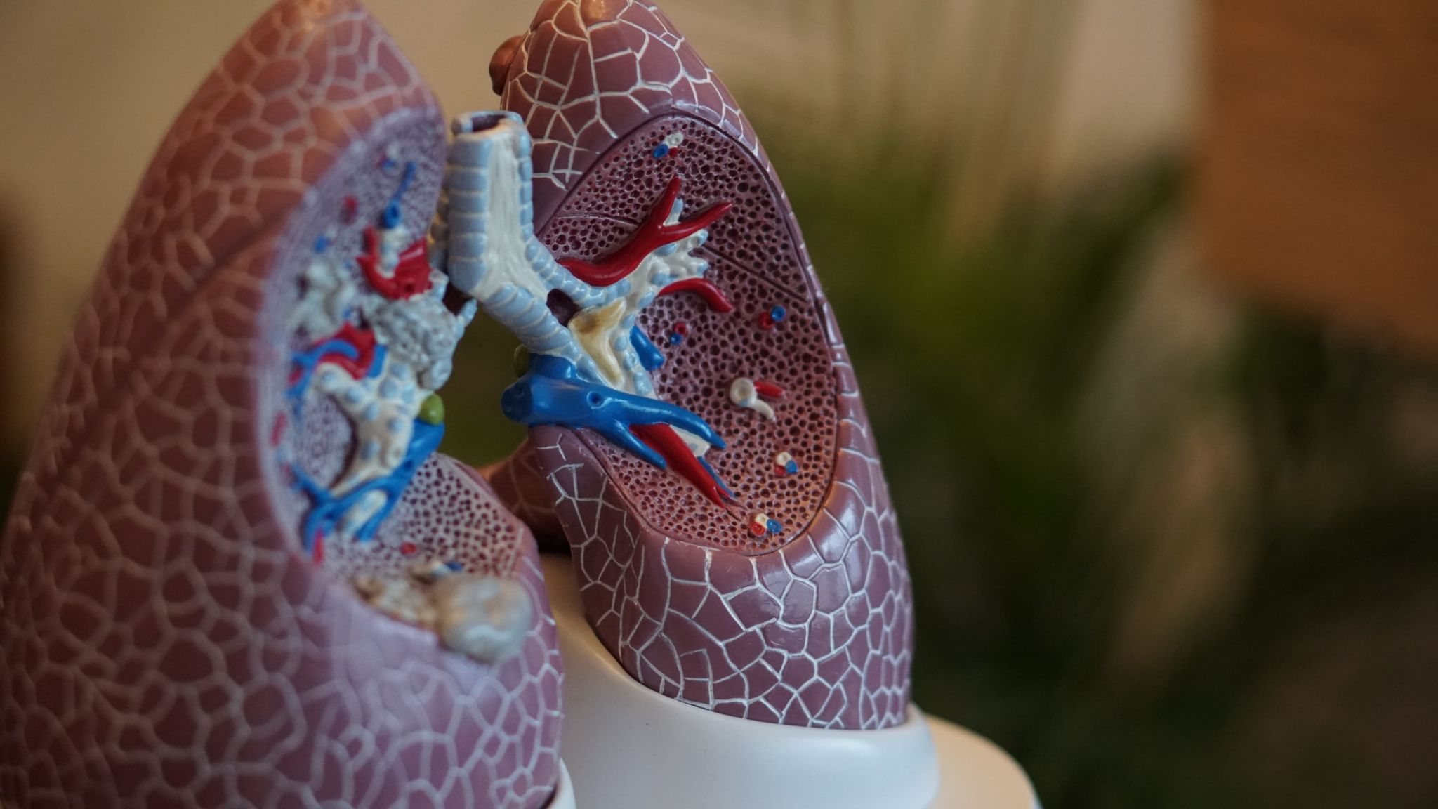 A model of healthy lungs